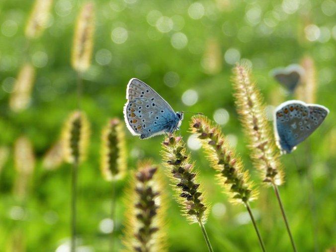 butterfly-3934592_1920